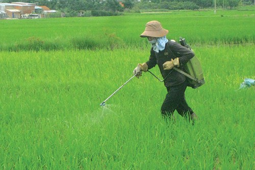 baovethucvat 2904 1417682593 - 90% nông dân không có kiến thức khi dùng thuốc bảo vệ thực vật